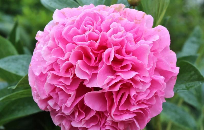 Carnation Bouquet на Пулков Сад