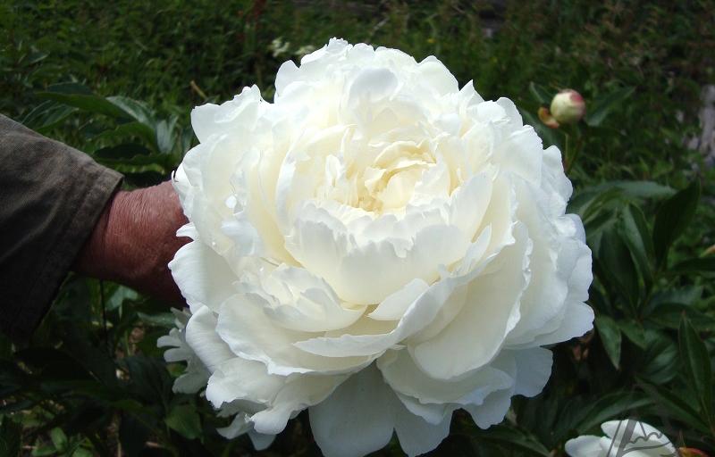Ann Cousins на Пулков Сад