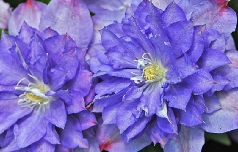 Blue Explosion на Пулков Сад
