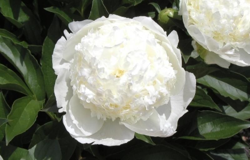 Bridal Gown на Пулков Сад
