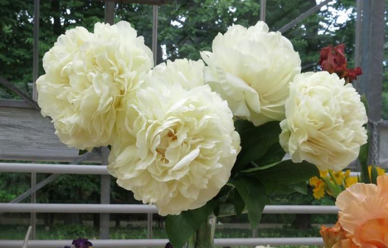 Blond Vision на Пулков Сад