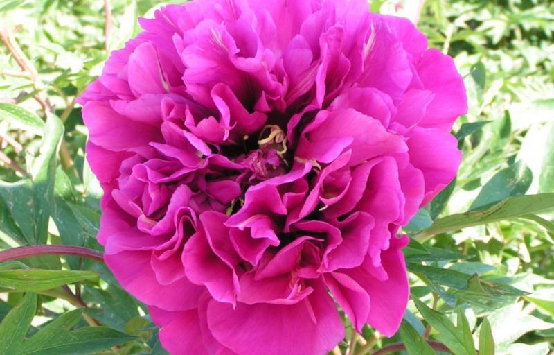 Belle Toulousaine на Пулков Сад